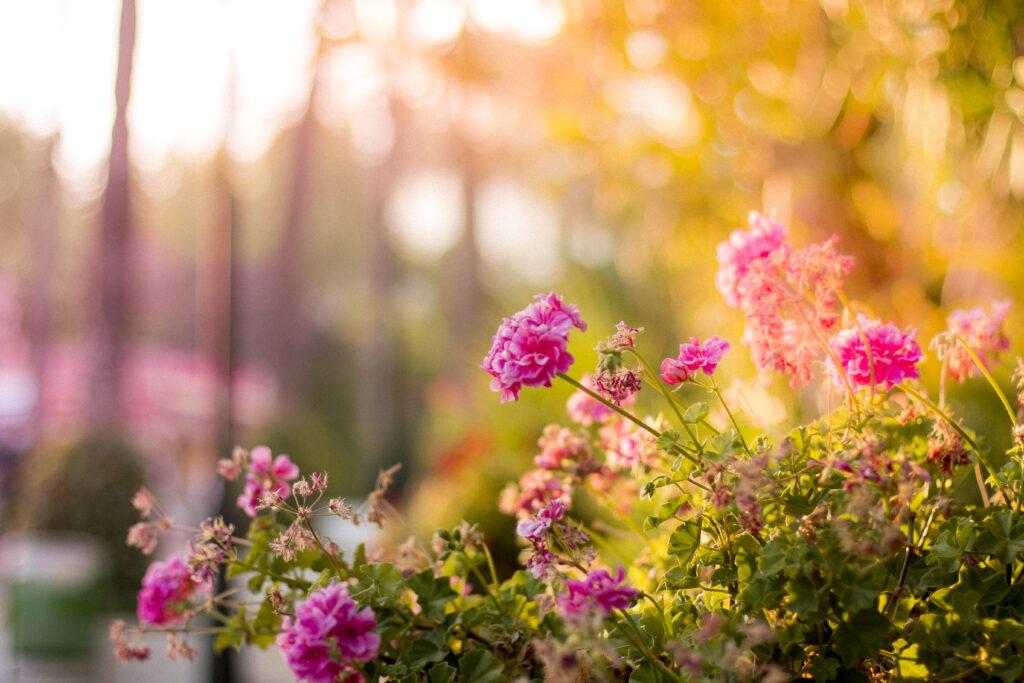Bahkan bunga-bunga yang bermekaran begitu memancarkan cinta Tuhan