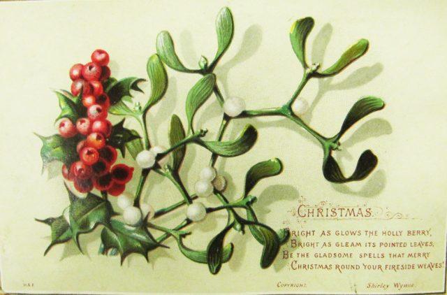 Mistletoe: Hijau Abadi nan Beracun Namun Menjadi Pembantu bagi Pasien Kemoterapi